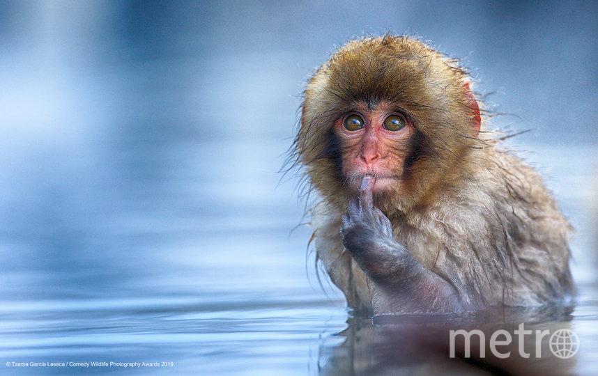 """Также организаторы отметили 12 фотографий, получивших высокую оценку. """"Быть или не быть."""". Фото Txema Garcia Laseca / Comedy Wildlife Photography Awards"""