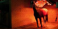 У лошадей есть свой солярий и душ в конном клубе в Ленобласти