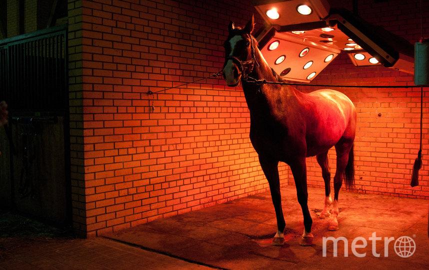 """Солярий для лошадей. Фото Анна Лутченкова, """"Metro"""""""