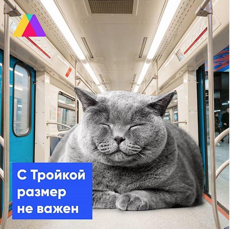 "В Сети набирает обороты флэшмоб ""Бро не багаж"". Фото скриншот @gorodtroika"