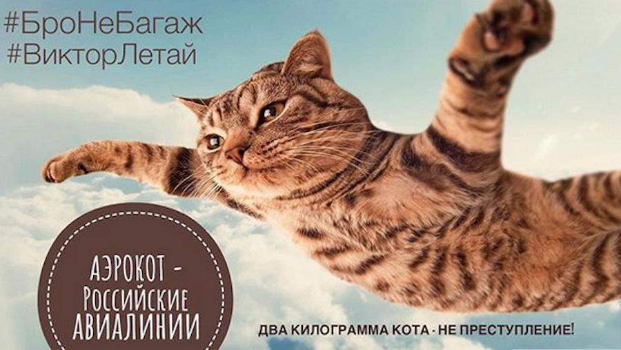 "В Сети набирает обороты флэшмоб ""Бро не багаж"". Фото скриншот @the_cat_maffin"