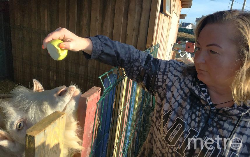 """Обитатели ранчо """"Золотая подкова"""". Светлана угостила Яшу яблочком, чтобы тот попозировал. Фото Сидоровская Наталья, """"Metro"""""""