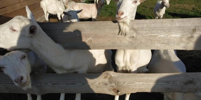 Обитатели фермы на дополнительном земельном участке.