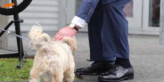 Принц Чарльз подружился с милой собачкой.
