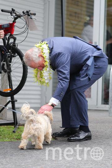 Принц Чарльз подружился с милой собачкой. Фото Getty