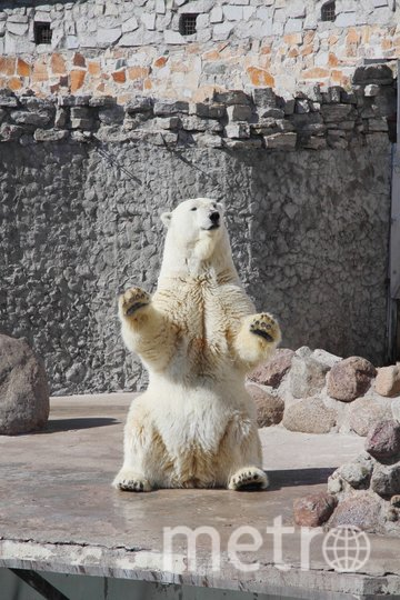 Медведица Услада. Фото spbzoopark, vk.com