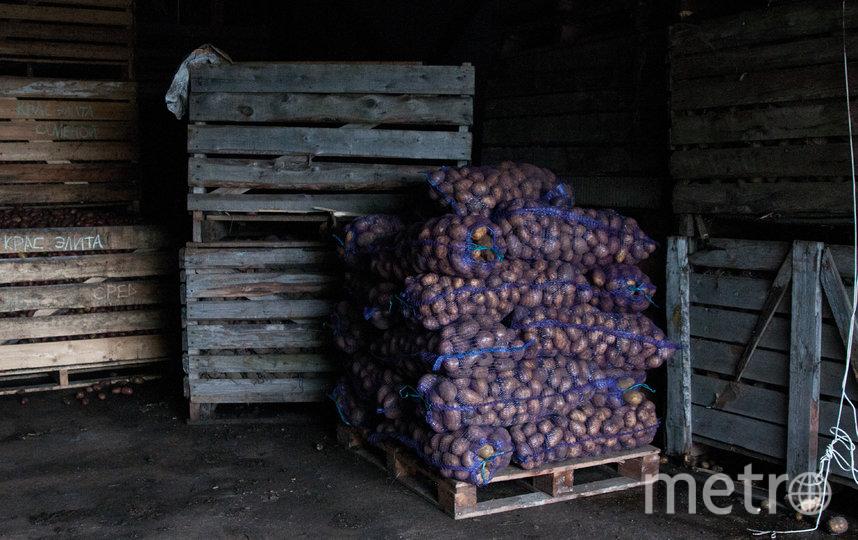 "Хранилище для картофеля. Фото Анна Лутченкова, ""Metro"""