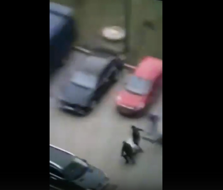 За убийство барана из Петербурга депортировали гражданина Азербайджана. Фото скриншот видео vk.com/kapitanovspb