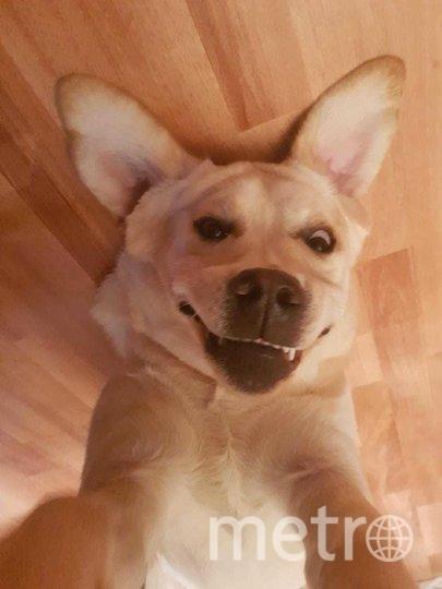 """""""Это Янжи, ей 7 месяцев. Иногда мы в шутку с мужем смеёмся говоря что у нас """"злой белый лабрадор"""". Это единственная порода собак, у которых отсутствует ген агрессии"""". Фото Анна, """"Metro"""""""