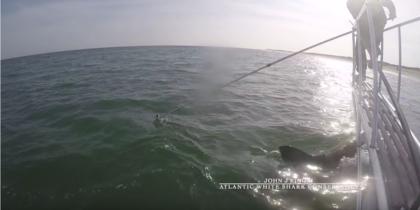 Акула-людоед попыталась атаковать исследователя: видео