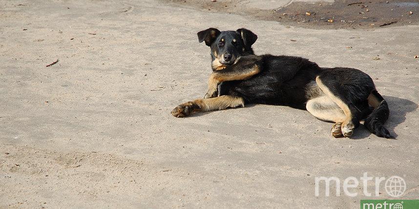 Московские спасатели освободили собаку по кличке Кекс