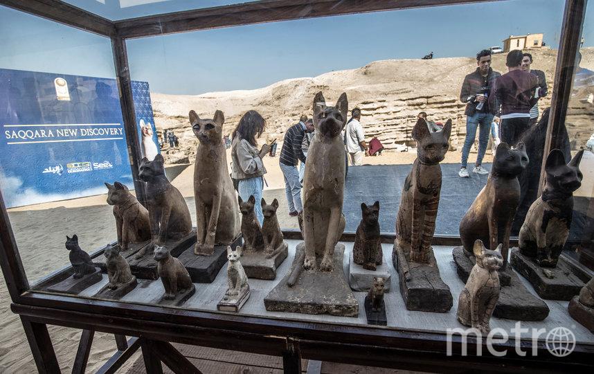 Власти Египта представили экспозицию мумифицированных животных, найденных в некрополе Саккара. Фото AFP