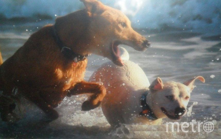 "Салли и Динка. Суровым собакам тоже нужен отдых. Особенно на море! Фото Машкова Алена, ""Metro"""