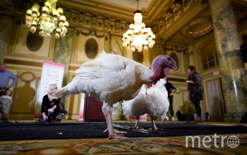 В этом году индюки получили имена Хлеб и Масло. Фото Getty