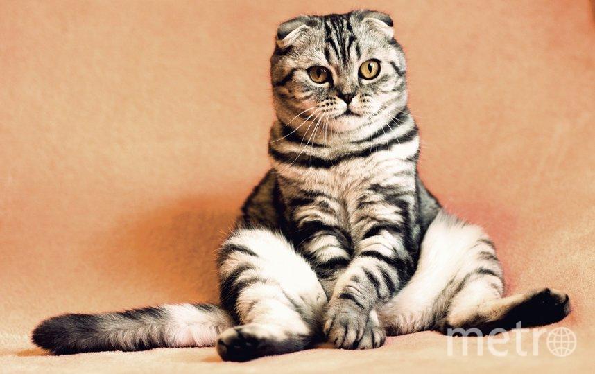 Кот. Фото Pixabay