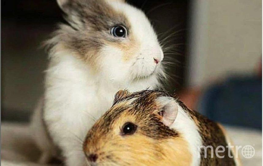 "Кроля. Фото ""Metro"""