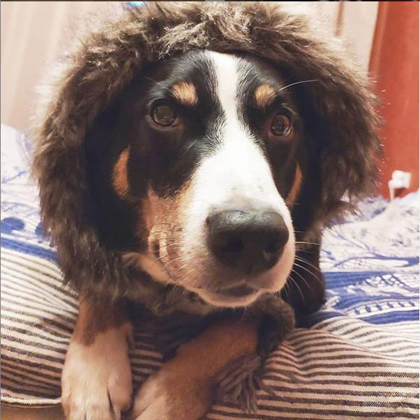 Виолетта Апенцеллер. Фото Instagram: @poetessa_s_ruchkoi
