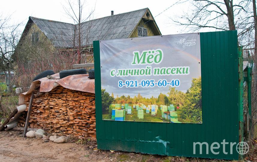 "В Отрадном. Фото Анна Лутченкова, ""Metro"""