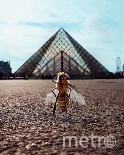 В Сети появился первый в мире инфлюенсер-пчела. Фото скриншот @ bee_nfluencer
