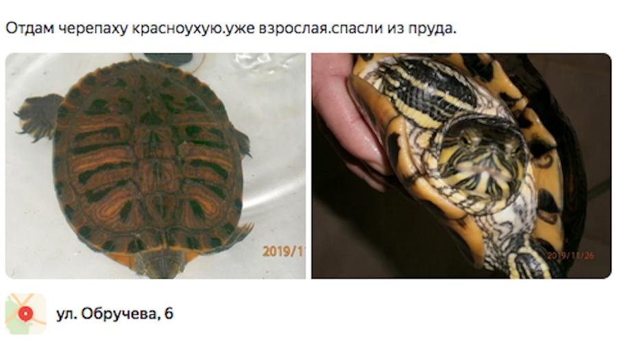 В комментариях автора поста напоминают, что земноводные способны закопаться в ил и переждать зиму. Фото скриншот с yandex.ru/local