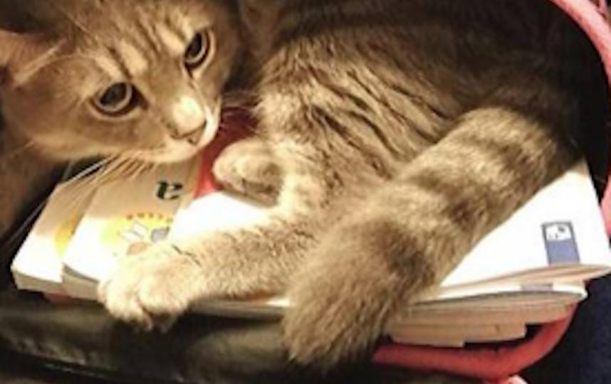 Тот самый кот. Фото VK/Новый Уренгой