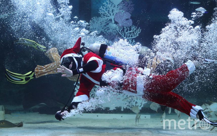 На днях в Сеуле прошло подводное шоу, посвящённое Рождеству. Фото Getty