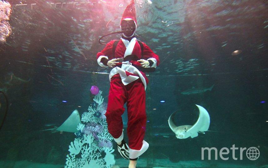 На днях в Сеуле прошло подводное шоу, посвящённое Рождеству. Фото AFP