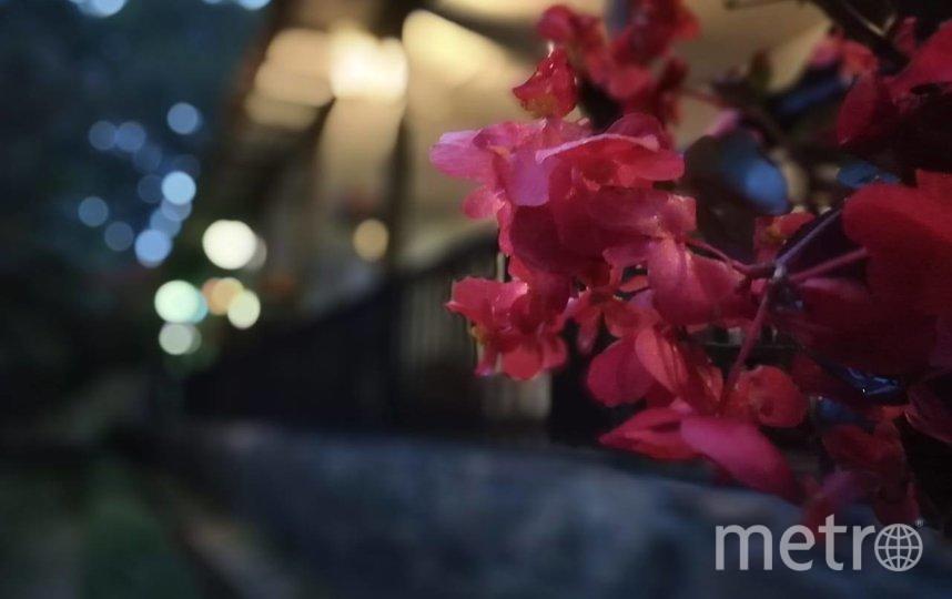 Цветы на фазенде. Фото Felipe Tovar Marulanda | Colombia