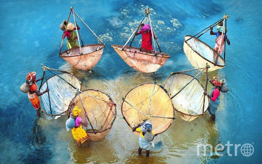 Цвета жизни. Фото Pranab Basak | International