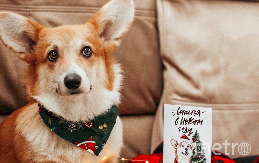Петербургский пёс-корги стал фудблогером и посещает рестораны. Фото  instagram @corgi.rick