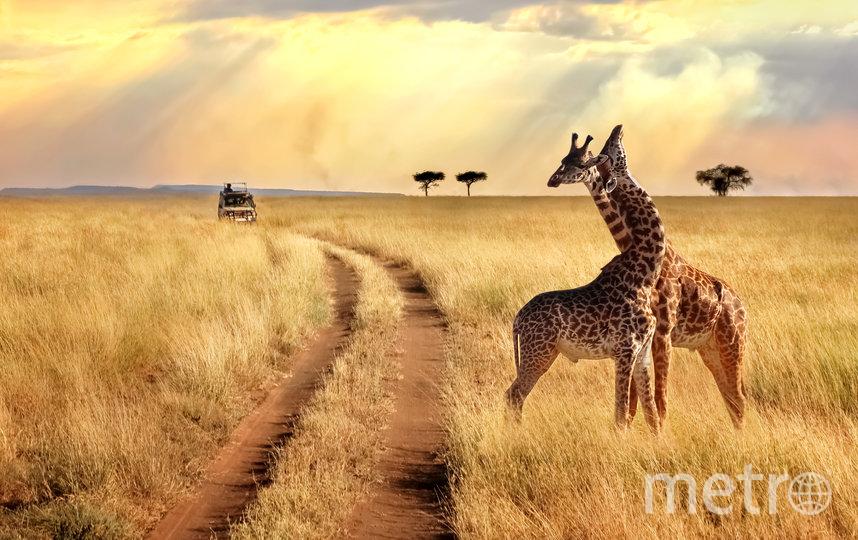 Главный приз – фотоэкспедиция в Африку. Фото iStock