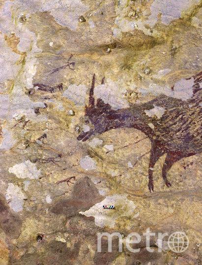 В Индонезии нашли наскальные рисунки, возраст которых составляет почти 44 тысячи лет. Фото AFP
