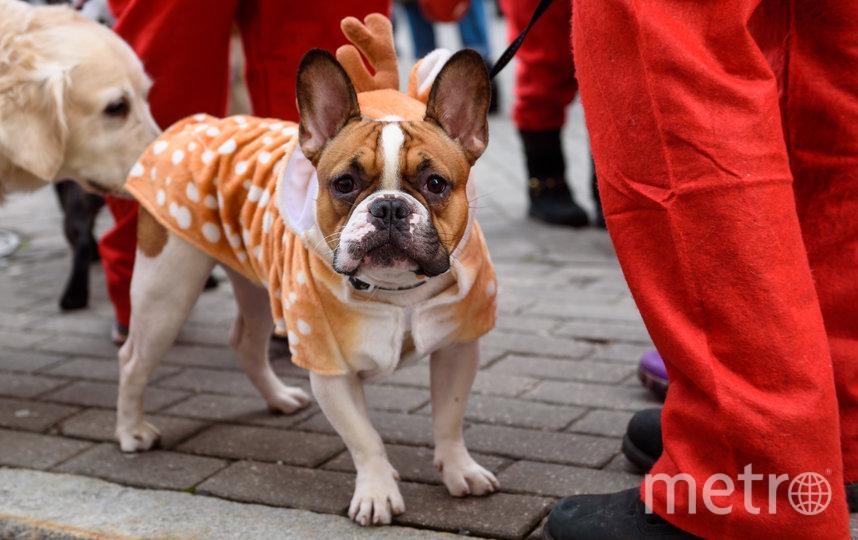 Забег Санта-Клаусов в Риге, Латвия. Фото AFP