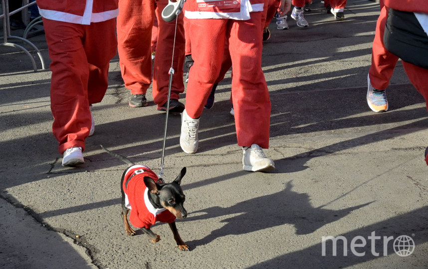Забег Санта-Клаусов в Будапеште, Венгрия. Фото AFP