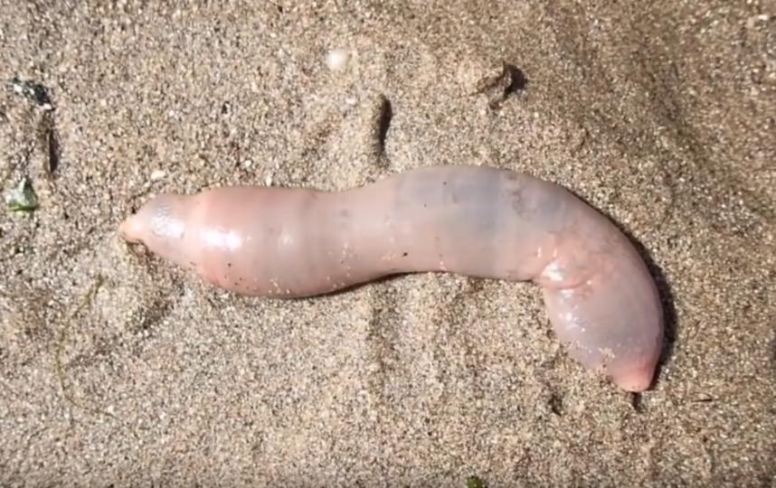 """""""Рыбы-пенисы"""". Фото Скриншот Youtube"""