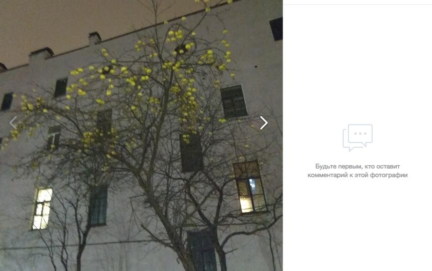 В Сети обсуждают усыпанное яблоками дерево в центре Петербурга. Фото скриншот vk.com/typical_ps