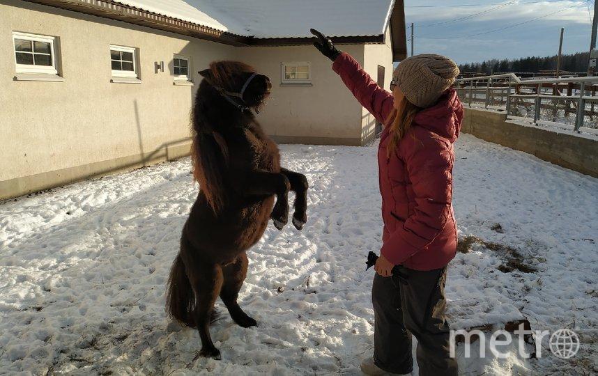 """Лошадок на ферме не только разводят, но и дрессируют. Фото Ольга Кабанова, """"Metro"""""""