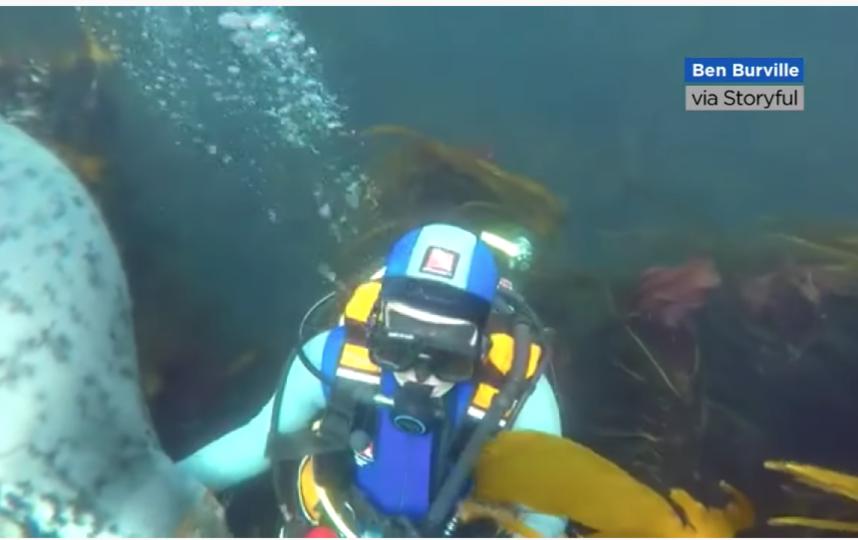 Фото: Youtube / ABC7 News Bay Area. Фото Скриншот Youtube