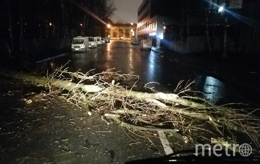 Фото последствий урагана в Петербурге. Фото https://vk.com/spb_today, vk.com
