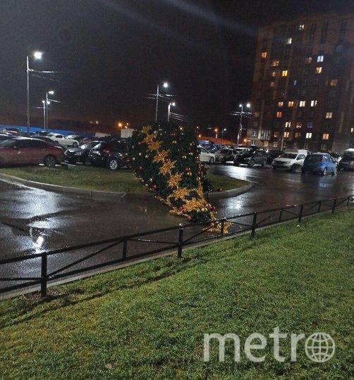 Упавшая елка в Петербурге. Фото vk.com