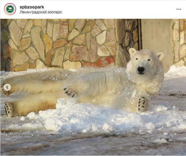 """Хаарчаана в Ленинградском зоопарке. Фото https://www.instagram.com/spbzoopark/, """"Metro"""""""