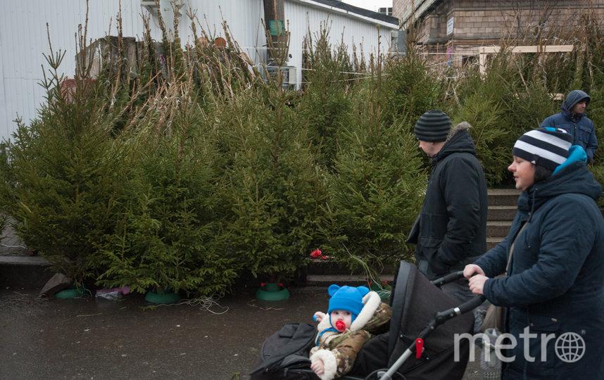 """Будет ли в этом году спрос на ёлки ажиотажным, покажут последние предновогодние дни. Фото Святослав Акимов, """"Metro"""""""