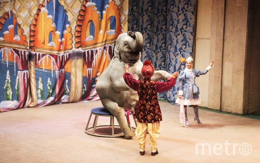 Мона выходит в финале новогоднего спектакля, выполняя трюки под руководством Сарвата Бегбуди и Натальи Дуровой. Фото Ирина Карабач