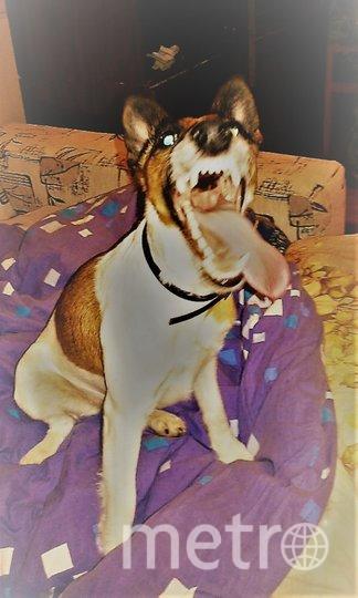 """Во вложении фотография моей любимой питомицы Зеты. Зета очень позитивная и игривая собака, приносящая нашей семье большую радость. Фото Олеся Рязанова из г. Санкт-Петербург, """"Metro"""""""