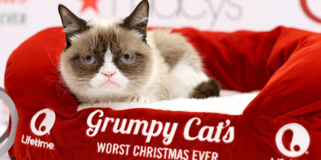 Сердитая кошка (Grumpy Cat).