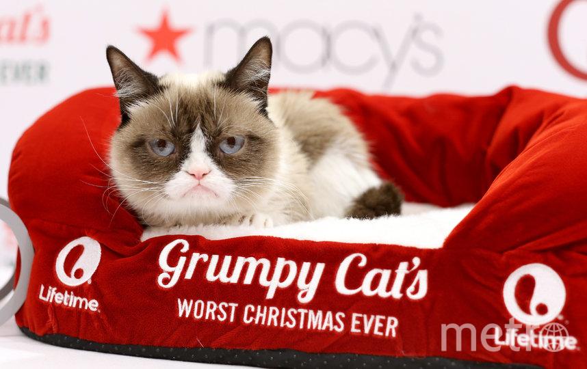 Сердитая кошка (Grumpy Cat). Фото Getty
