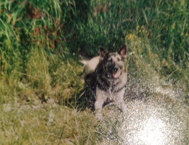 Та самая собака, которую опознала по фото Юлия. Фото предоставила Нелля Семёнова