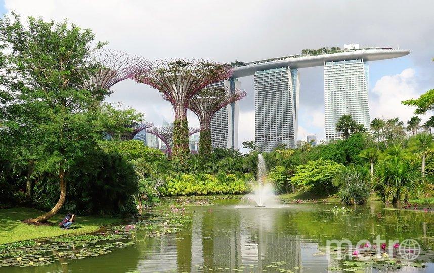 Сингапур - город будущего. Фото pixabay.com