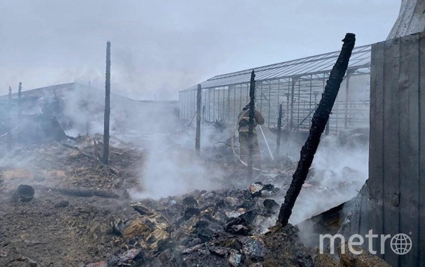 Пожар в Нестерово. Фото РИА Новости