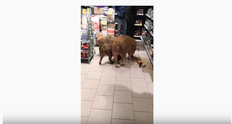 Инцидент в магазине. Фото Скриншот видео Youtube/watch?v=QMYNmHF_ZFs&feature=emb_logo